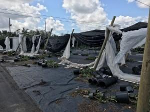 Nursery-Hurricane-Irma5
