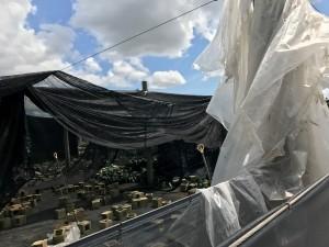 Nursery-Hurricane-Irma9