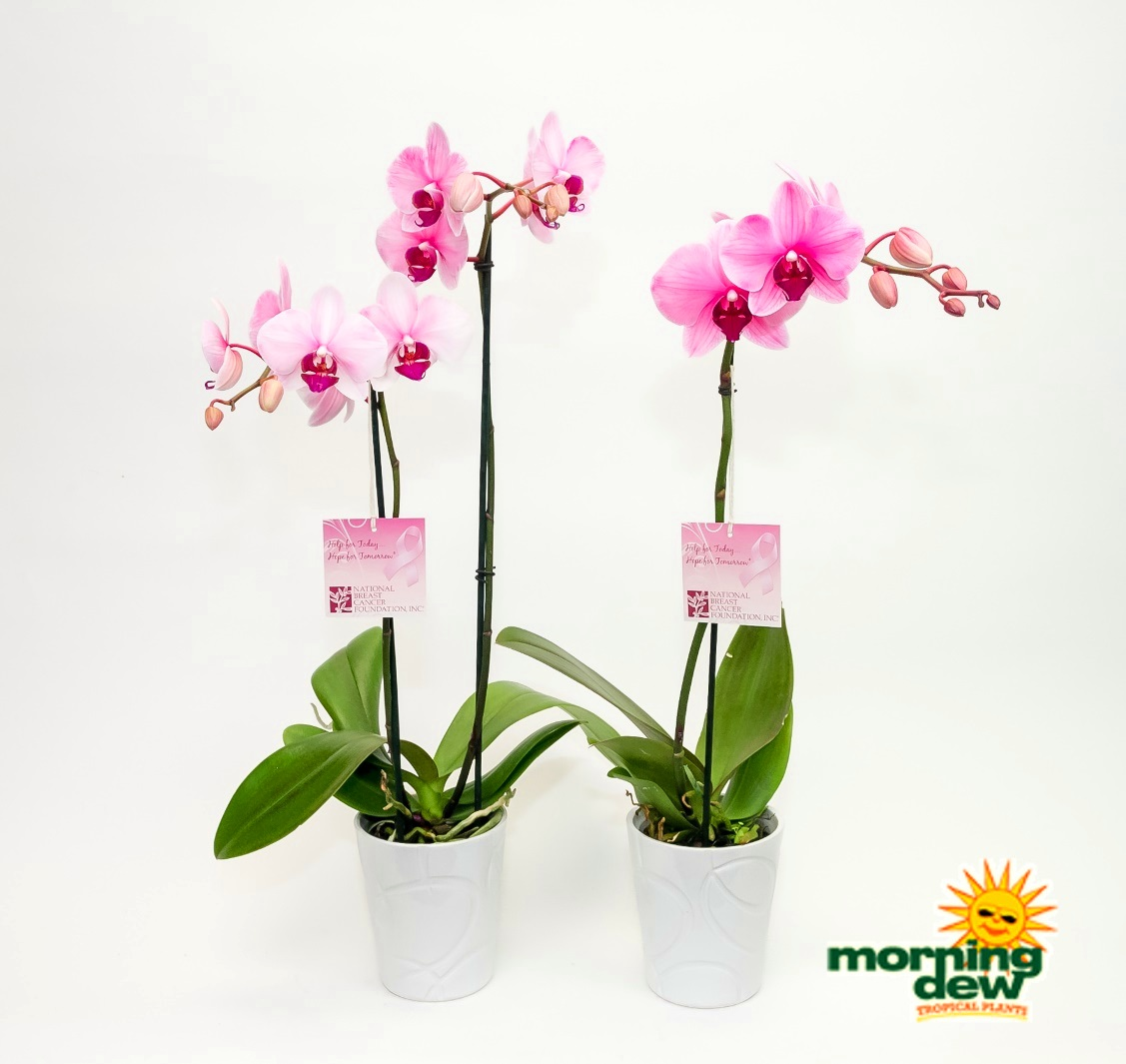 Breast Cancer Awareness Month Morning Dew Tropical Plants