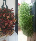 Flowering Garden Mum Bag 9 in