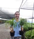 palm ponytail guatemalan stump
