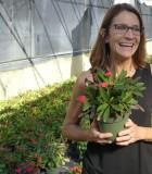 Flowering Crown of Thorns 5 in