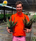 Sansevieria Starfish 8 in