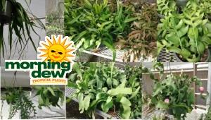 HB Cactus Epiphyllum Asst 8 in