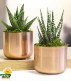 LiveTrends Copper Mini 3 in