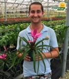 Bromeliad Tillandsia Antonio 5 in