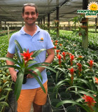 Bromeliad Guzmania Tatiana 5 in