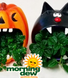 Halloween Howlers 5 in