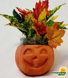 Halloween Pumpkin Croton 4 in
