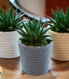 LiveTrends Hygge with Succulents 5 in