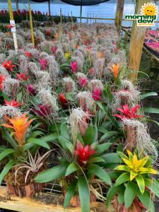 Bromeliad Driftwood Garden 6 in