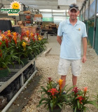 Bromeliad Gardens 8 in & 10 in