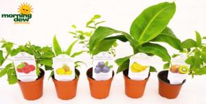 Fruit Assorted Varieties 4 in