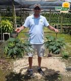 HB Philo Tahiti 10 in