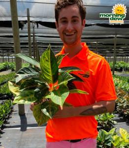 Aglaonema Papaya 6 in