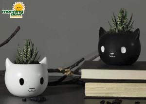 LiveTrends Havoc Cats 4 in