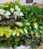 Assortments Tropical Foliage 3 in