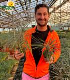 Cactus Madagascar Palm Geayi 4 in