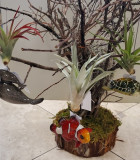 Bromeliad Tillandsia Hanging Sea Life 3 in