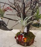 Bromeliad Tillandsia Hanging Sea Life 3 in