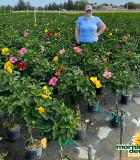 Flowering Hibiscus Braid Multi Color 8 in