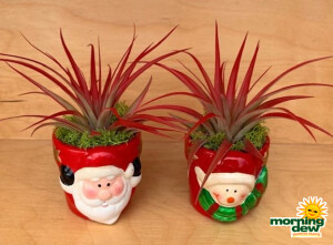 Bromeliad Tillandsia Christmas Planters