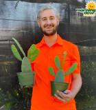 Cactus Opuntia (Prickly Pear)