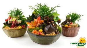 Dish Garden Fall Ceramic
