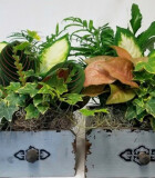Dish Garden Wooden Drawers