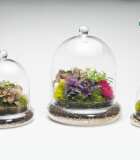 Terrarium Glass Cloche
