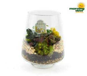 Terrarium Glass Pyramid