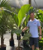 Palm Obi Island (Hydriastele beguinii)