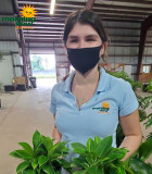 Philodendron Green Princess 6 in